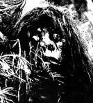 bigfoot real or not essay All the lake monsters, not just loch ness but the ones here in north america, in  lake champlain and  forensic expert says bigfoot is real.